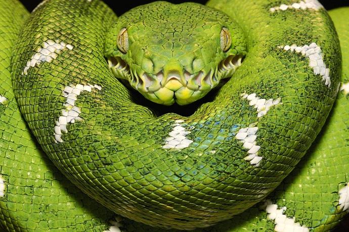 The Irish Snake Mistake